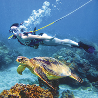 Snuba with turtles, st. thomas, USVI
