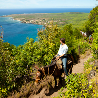 Molokai Mule Ride Hawaii