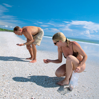 "Sanibel ""stoopers"" comb the island's shores for seashells.  Photo: Lee County"