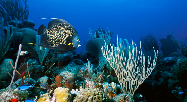 Belize, Ambergris Caye reef