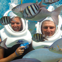 All Sea Trek Fish, Grand Cayman