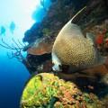 Cayman Islands Fish