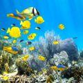Florida Keys Coral Reef Fish
