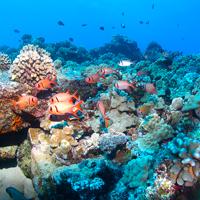 Maui, Molokini Reef Fish