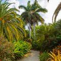 Grand Cayman Queen Elizabeth Botanical Park