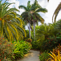 Grand Cayman Queen Elizabeth Botanical Park