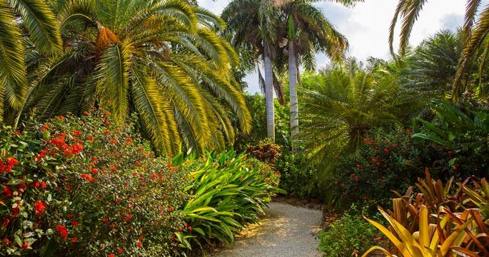 Grand Cayman U0026 39 S Eco Adventures