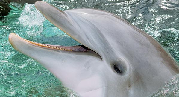 Dolphin, Seaworld