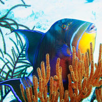 Queen Triggerfish Teeth Into the Blue: Diving ...