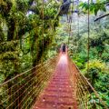 Costa Rica Cloud Forest