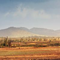 Bonaire Desert Landscape