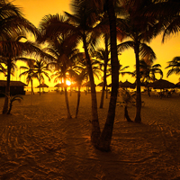 Aruba Palm Beach Sunset