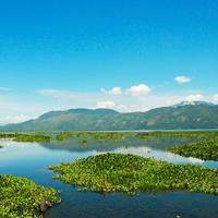 Honduras Lake Yojoa