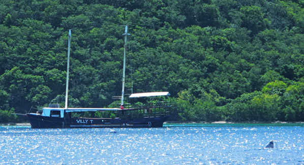 BVI Norman Island Willy T Bar