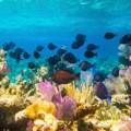 Belize Hol Chan Reef Scene
