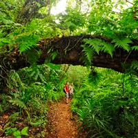 Tahiti Mooriea Hiking