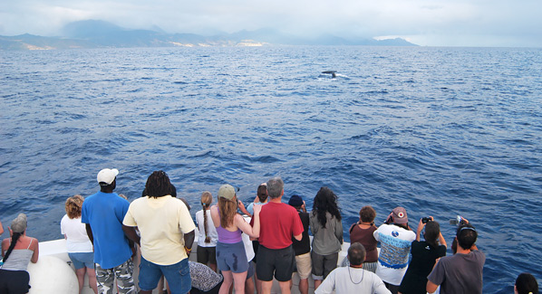 Dominica Whale Watching From Boat