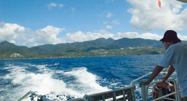 Guadeloupe Whale Watching