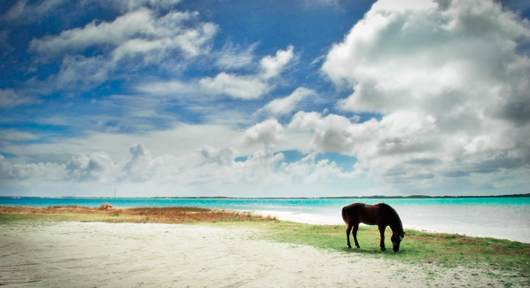 Bonaire Horse by Lac Bay