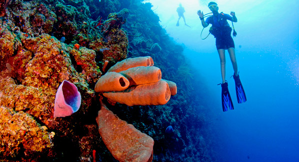 Cayman Islands Reef