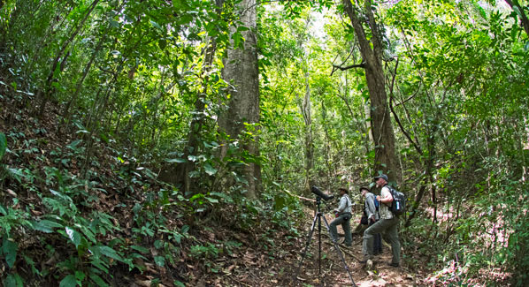 Birding Tour Panama Canopy Lodge