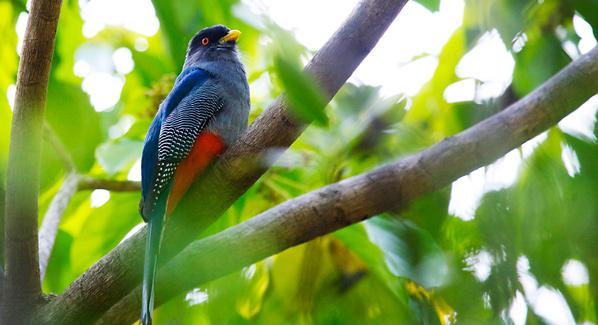 Dominican Republic Birding