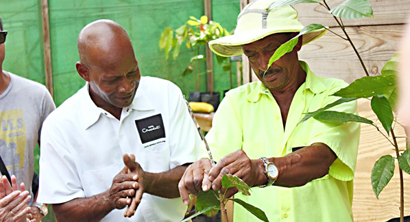 St. Lucia Boucan Hotel Chocolate Tour