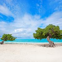 Divi Trees Aruba