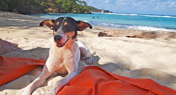 Jamaica Dogs