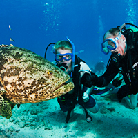 Big animal encounters, Diving with Goliath Grouper