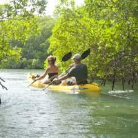 Kayaking the mangroves in Bonaire