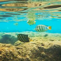 oahu fish, hawaii