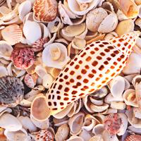 Best Shelling Beaches On Sanibel Island