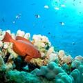 St Croix Reef, USVI