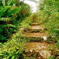 Saba Mt Scenery