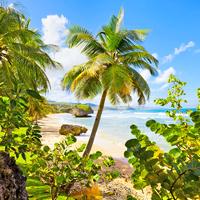 Barbados Bathsheba