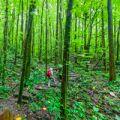St. Vincent Vermont Nature Trail