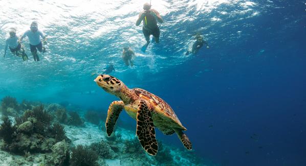 Bonaire Klein Turtles