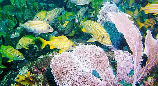 Puerto Morales Mexico Reef Fish Snorkel