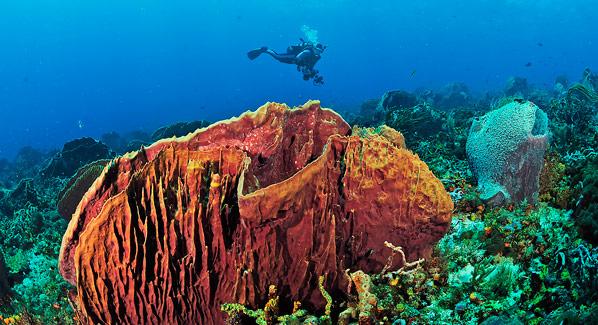 Trinidad Tobago Diving