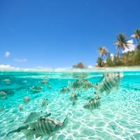 Fish Tahiti