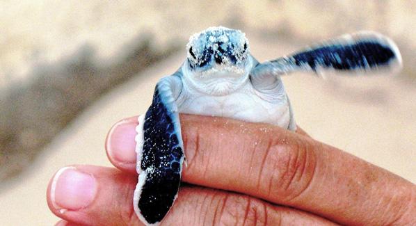 Sea Turtle Cancun