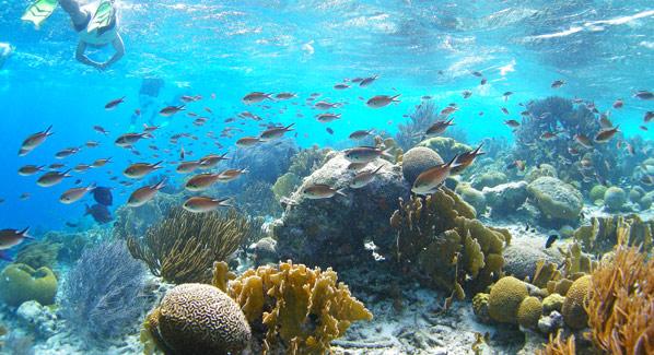 Bonaire Reef