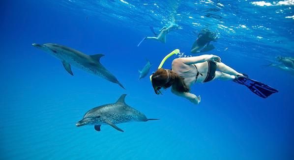 White Sand Ridge Dolphins