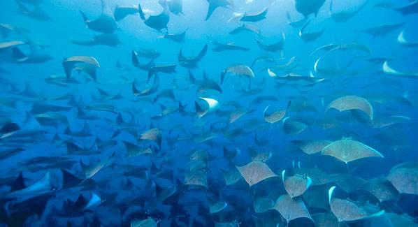 cabo sharks